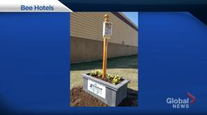 Goodwill Alberta installs 'bee hotels' to help pollinators (06:00)