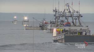 DFO pulls about 500 lobster traps from St. Mary's Bay (01:47)