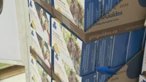 Door-to-door Girl Guide cookie sales suspended for second year (00:57)
