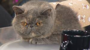 Cats, dogs and animals of all kinds at the Edmonton Pet Expo