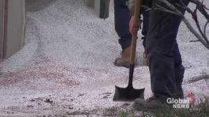 Truck spills fertilizer near Hwy. 35 south of Pontypool in City of Kawartha Lakes (00:39)