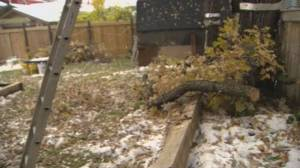 Manitobans come together in wake of massive storm