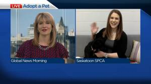 Surge in adoptions at Saskatoon SPCA