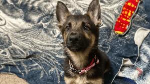 Adopt a Pet: Athena the dog (04:00)