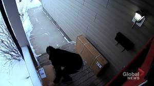 Videos show packages being stolen off 2 separate Calgary porches