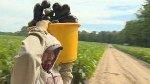Migrant workers denied entry to Canada during pandemic