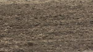 Crop yields expected to be very low compared to 2020 harvest (01:52)