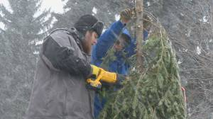Regina scouts collecting truckloads of Christmas trees to raise money for programming