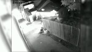 Police release video of two arson incidents in Central and West Hamilton