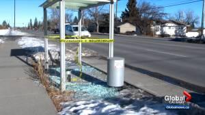 Numerous Calgary bus shelters damaged (01:58)