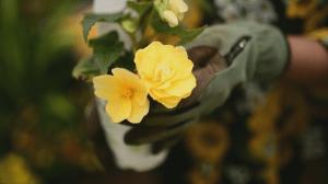 GardenWorks: Hope is Growing campaign (04:12)