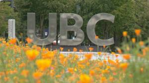 UBC Board chair resigns after liking controversial tweets