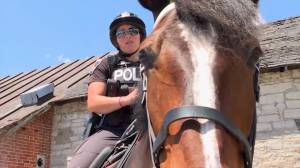 Kingston police chief speaks to loss of mounted unit