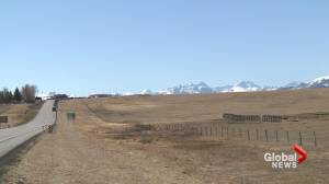 Southern Albertans offered COVID-19 vaccine at Montana border (01:56)