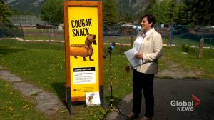Banff launches education campaign aimed at dog, wildlife safety (01:44)