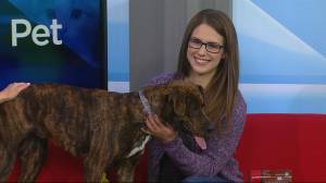 Saskatoon SPCA needs a home for Arya