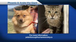Global Peterborough's Shelter Pet Project for June 25, 2021 (02:34)