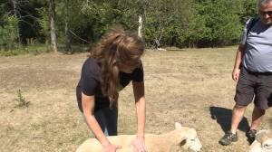 The Community Spotlight gets shined on the Happy Tails Farm Sanctuary