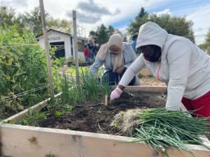 Edmonton Urban Farm expansion helps feed dozens of families (01:48)