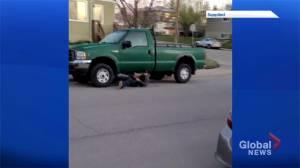 Video shows brazen catalytic converter theft in Calgary (00:34)