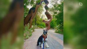 Downtown Winnipeg BIZ launches new app for pet owners and their dogs (05:09)