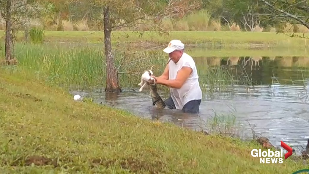 Click to play video 'Video captures rescue of puppy from jaws of alligator in Florida'
