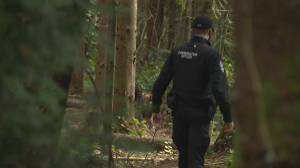 Cougar kills dog in late-night attack in Port Moody (01:46)