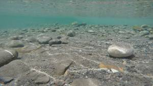 Controversy over plans to mine gravel from Vedder River in Chilliwack (02:03)