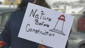 Group of protestors gathered at iconic Peggy's Cove Saturday (02:00)