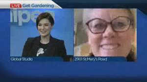 Get Gardening: Spring clean-up