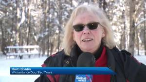 Haliburton Dogsled Races preview