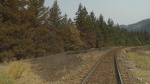The TSB temporarily stops rail service in Lytton
