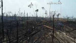Drone footage shows extent of damage to portion of Amazon rainforest after wildfires (01:26)