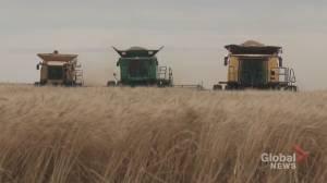 Alberta's agri-food industry has potential to kick-start economy post pandemic: report (01:56)