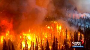 Abandoned campfire caused wildfire near Canmore: investigators (02:24)