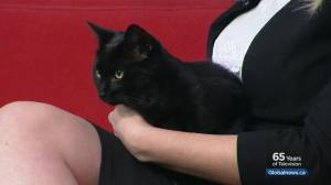 Calgary Animal Services Pet of the Week: Twilight (03:02)