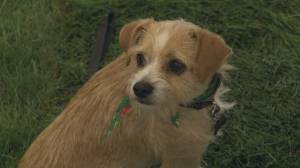Dozens adopt dogs from U.S. high kill shelters