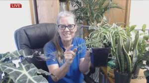 Get Gardening: Choosing houseplants (05:02)