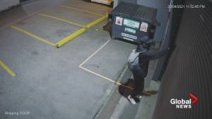 Camera-loving vandal caught on surveillance video in Vancouver (00:56)