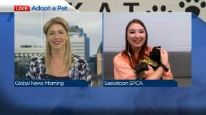 Adopt a Pet with Betty the brindle-shepherd (03:07)