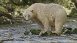 Coastal Experiences: Great Bear Rainforest (05:30)