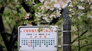 Cherry blossoms in Wuhan University bloom as coronavirus-stricken city begins 'restarting'