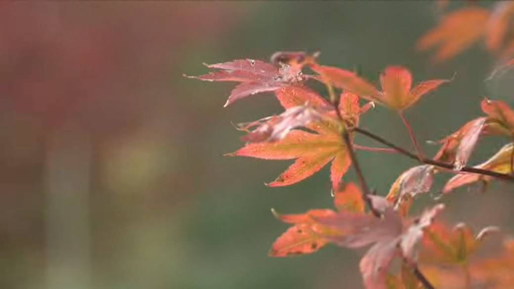 Click to play video: 'The science behind the beauty of fall'