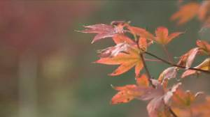 The science behind the beauty of fall (03:47)