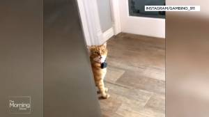 Tabby cat captures hearts with 'southern accent' meow