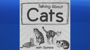 """Talking About Cats"" Podcast"