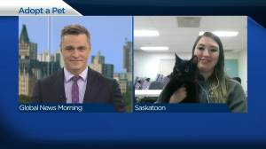 Adopt a Pet: Bon Bon the cat (03:43)