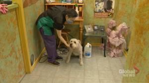 Coronavirus: Ontario enters 1st stage of reopening plan