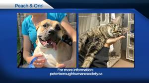 Global Peterborough's Shelter Pet Project for Aug. 20, 2021 (02:34)