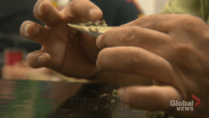 Study shows students driving after consuming cannabis